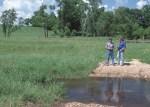 Stream crossing for livestock